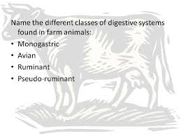 the digestive systems of farm animals ppt video online download