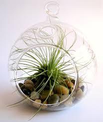 plant terrarium containers wholesale glass vases modern vase