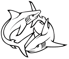 shark tattoos designs high quality photos and flash designs of