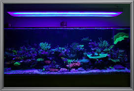 Aquascape Reef Show Off Your Large Tank Aquascape Reef2reef Saltwater And