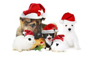 pet christmas we wish you your family and pets a merry christmas