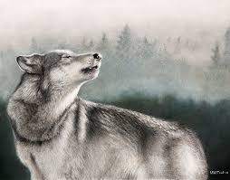 wolf drawing u2013 36 free printable pdf jpeg format download