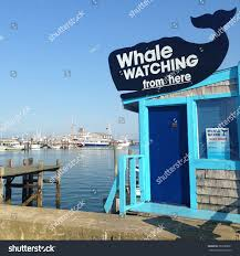 whale watching provincetown massachusetts stock photo 387688051