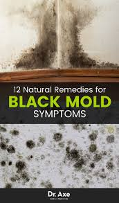 best 25 toxic black mold ideas on pinterest mould design mold