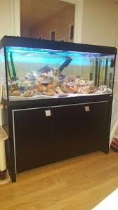 Fluval 125 Cabinet 4ft Fluval Roma 240 Fish Tank And Cabinet And Fish In Eastbourne