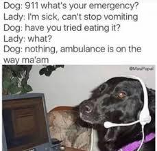 Dog Lady Meme - 20 hilarious dog memes
