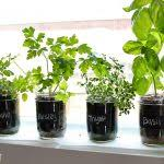 indoor herb garden plus hydroponic herbs plus indoor herb garden