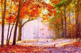 arriere plan de bureau fonds d écran automne feuilles mortes maximumwall