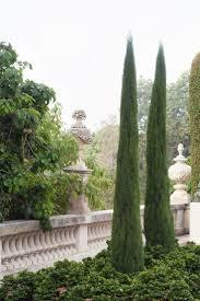 homelife 10 best plants for vertical gardens 13 best tropical garden images on pinterest monrovia plants