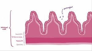 effects of aging on the digestive system digestive disorders