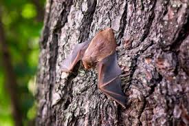 how to get rid of bats in the attic new england today