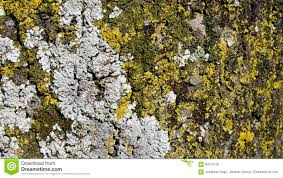 tree bark with many mold texture background stock photo image