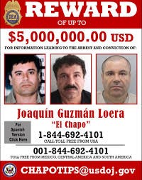 gulf cartel the rise and fall of world u0027s most ambitious drug lord business
