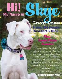 Blind Great Dane Meet Cleo U0026 Skye These Great Dane Girls Have Been Looking For