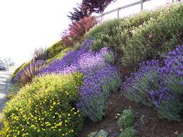 planting the seeds of innovation native plants gardening app 21 best hillside plants images on pinterest deer resistant