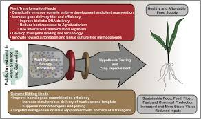 38 ap biology plant reproduction answers guide advancing crop transformation in the era of genome editing plant