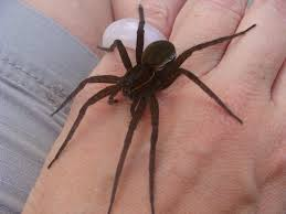 fishing spiders at spiderzrule the best site in the world about