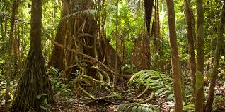 Under Canopy Rainforest by The Tropical Rainforest Such As The Amazon Is Divided Into 4