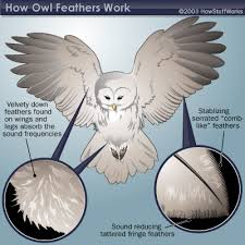 owls feathers and wing structure howstuffworks