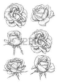 roses buds icons vector pencil sketch flowers with leaves on