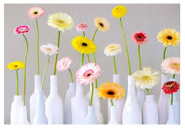 Flower Of The Month April Gerbera Is Flower Of The Month