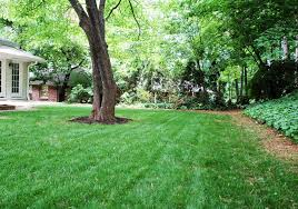 Backyard Ground Cover Options Backyard With Ground Cover And Zoysia Grasses Outdoor