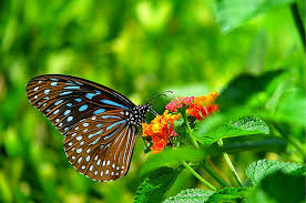 35 most beautiful butterfly pictures snaps