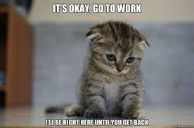 Tired At Work Meme - cat memes funny and cute kitten memes