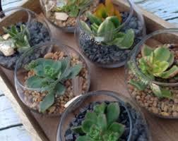 Flower Pot Wedding Favors - succulent wedding favor etsy