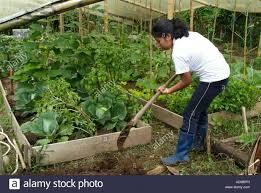 how often do you water a vegetable garden part 34 best 25