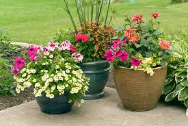 patio flower pots 28 images how to grow patio roses in