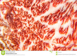 Beautiful Texture Beautiful Texture Of Wagyu Beef Are Close Up Stock Photo Image