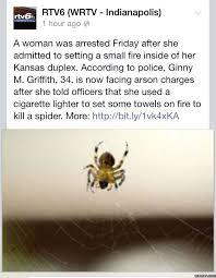 Misunderstood Spider Meme 16 Pics - 35 best spiders images on pinterest ha ha funny stuff and funny