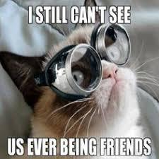 Mean Cat Memes - mean cat memes image memes at relatably com