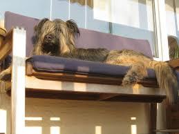 balkon bank lazy lotta auf der ihrer lieblingsbank hund buch book