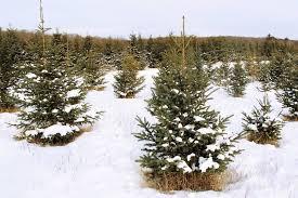 6ft snowy woodland christmas tree m u0026s christmas ideas