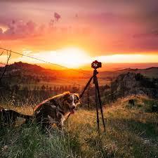 australian shepherd 60 minutes gorgeous australian shepherd dog photography 8 pics justviral net