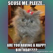Cat Memes Generator - the 25 best birthday meme generator ideas on pinterest happy