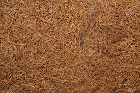 dry coconut fiber for backgrounds or textures stock photo