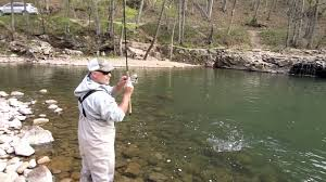 West Virginia rivers images Trout fishing west virginia 39 s elk river jpg