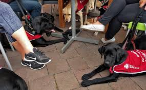 How Does A Guide Dog Help A Blind Person Facts About Guide Dogs Blind Foundation
