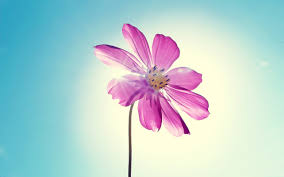 purple magenta flower 4154198 2560x1600 all for desktop