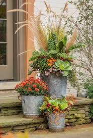 Where To Buy Fall Decorations - well here u0027s where to buy bittersweet seedlings again i need a
