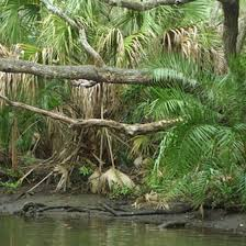 Florida nature activities images Children 39 s activities in south florida usa today jpg