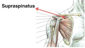 Rotator Cuff Injury From Bench Press Rotator Cuff Diagrams Exercises Periodic Tables