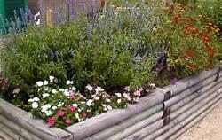 herbaceous ornamental plants