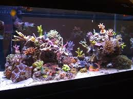 t5 lighting fixtures for aquariums t5ho information lighting forum nano reef com community