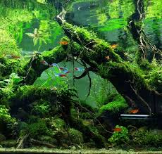 Most Beautiful Aquascapes 297 Best Aquascapes Images On Pinterest Aquascaping Aquarium