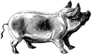 learn how to draw a pig