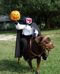 cool costumes 15 cool dog costume ideas shelterness